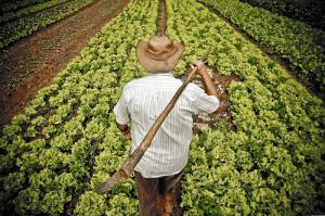 Empréstimo para agricultor