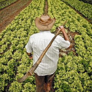 Empréstimo para agricultor 7